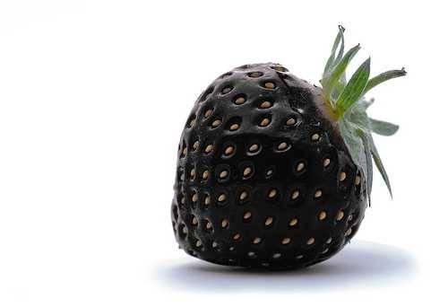 Выращивание сорта черный принц: технология, агротехника и уход