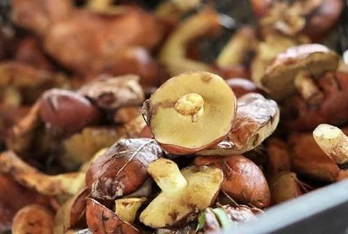 Как быстро почистить маслята от кожицы и видео правильной чистки грибов оригинальными способами