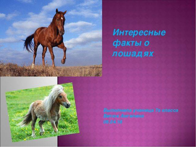 Факты о лошадях: особенности лошадей, конный спорт, фото