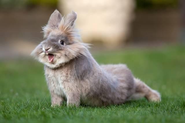 Ринит у кроликов — лечение и профилактика насморка
