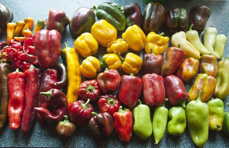 После чего можно сажать баклажаны на следующий год и с чем рядом на одной грядке, какие другие овощи — лучшие соседи и предшественники в открытом грунте и теплице?