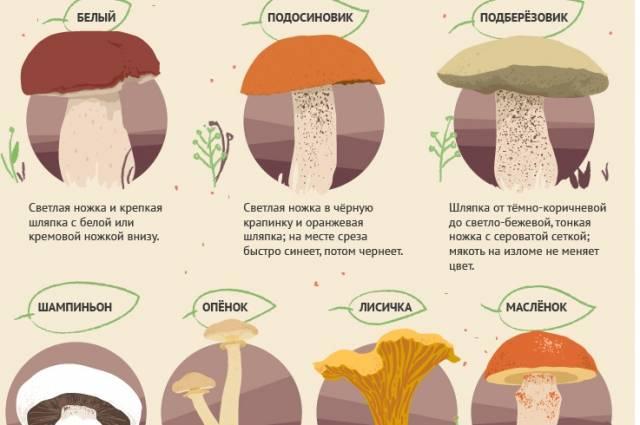 Грибы в орловской области (карта грибных мест)