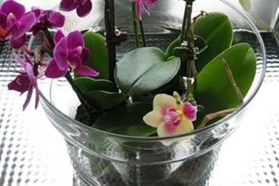 Полив орхидеи зимой во время цветения и как часто это нужно делать