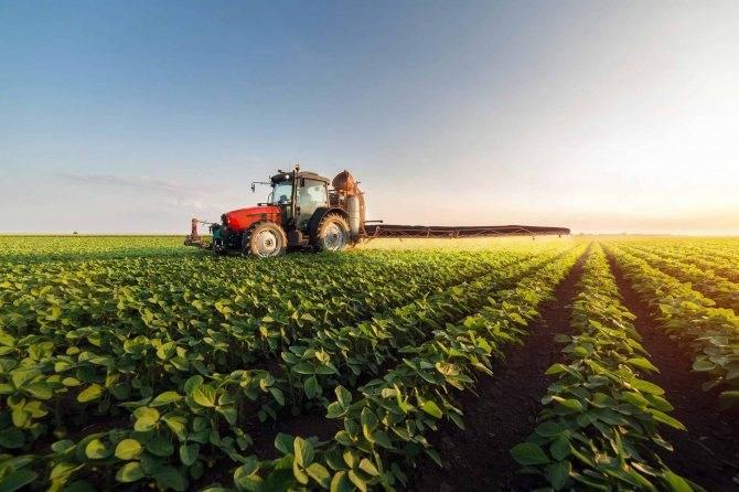 Посев озимой пшеницы: сроки, нормы и способы посева - сад и огород