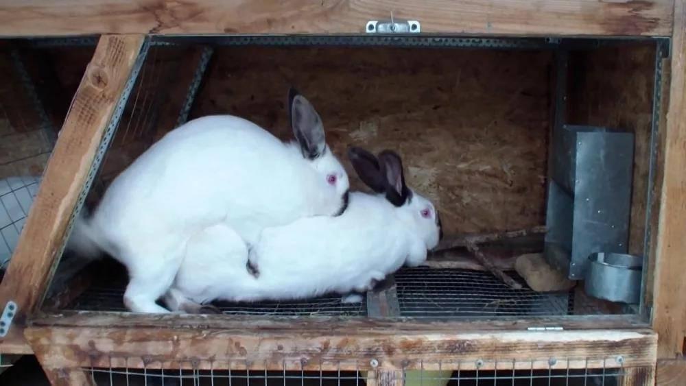 Как организовать кроликам зимовку на улице