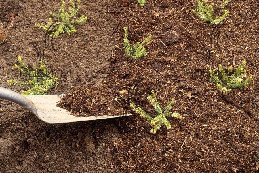 Мульчирование опилками: нюансы использования, подготовки и внесения в почву, а также плюсы и минусы применения свежих и перепревших опилок в качестве мульчи