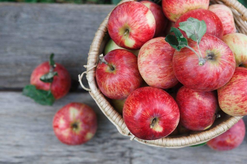 Обзор лучших сортов яблони для беларуси