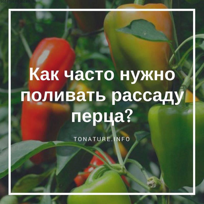 Как вырастить рассаду перца в домашних условиях: лучшие способы выращивания крепкой рассады сладкого перца из семян, пошаговая инструкция