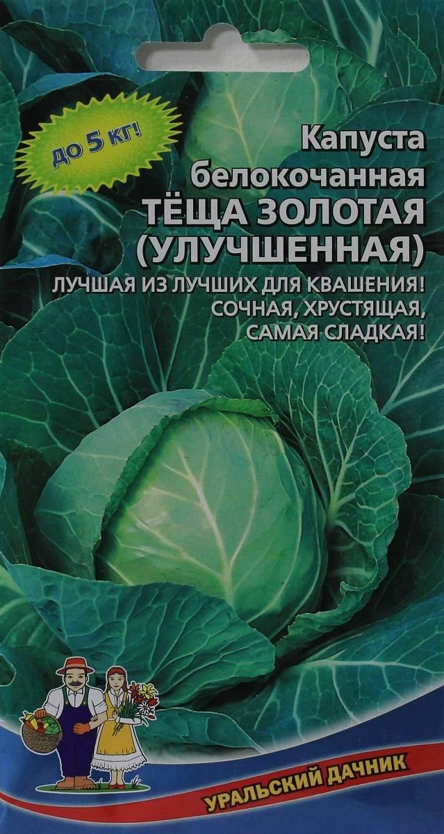 ✅ о капусте теща: характеристика и описание сорта, выращивание и уход - tehnomir32.ru