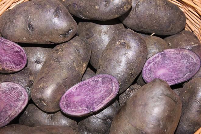 Фиолетовый картофель: характеристика и описание сорта, полезные свойства, отзывы, фото
