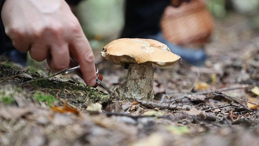 Где лучше собирать грибы в подмосковье в 2021 году: карта грибных мест подмосковья 2021 - ladiesvenue.ru