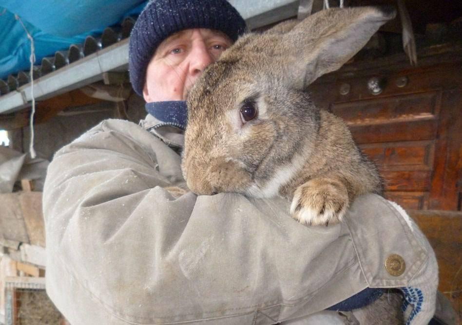 Рыжий кролик: топ 6 пород, правила содержания и ухода, как выбрать питомца