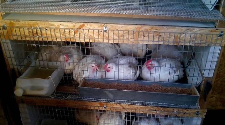 Пошаговая инструкция как сделать удобный ящик для цыплят своими руками