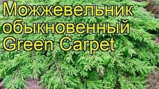 Можжевельник обыкновенный «грин карпет»: описание, посадка и уход
