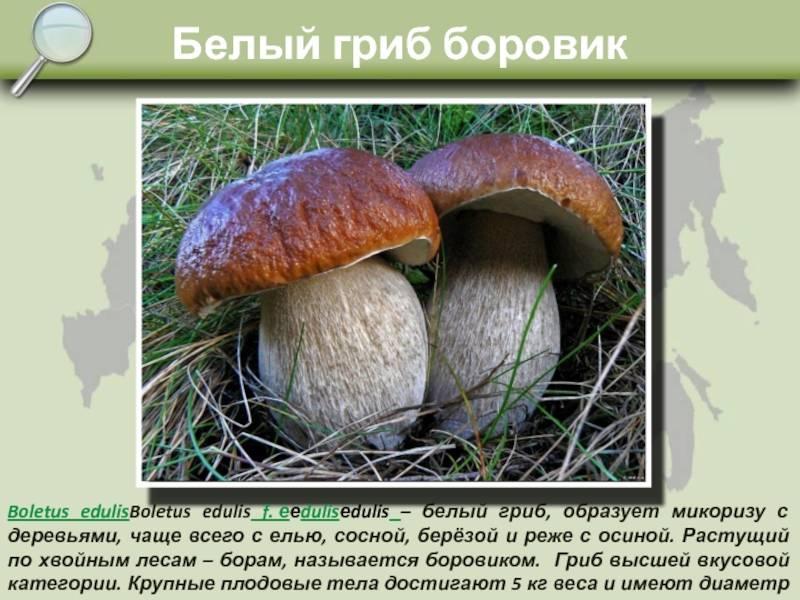 Сходство и отличия грибов и растений
