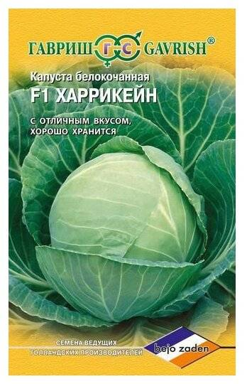 Капуста харрикейн: описание, посадка и уход, урожайность, фото, отзывы
