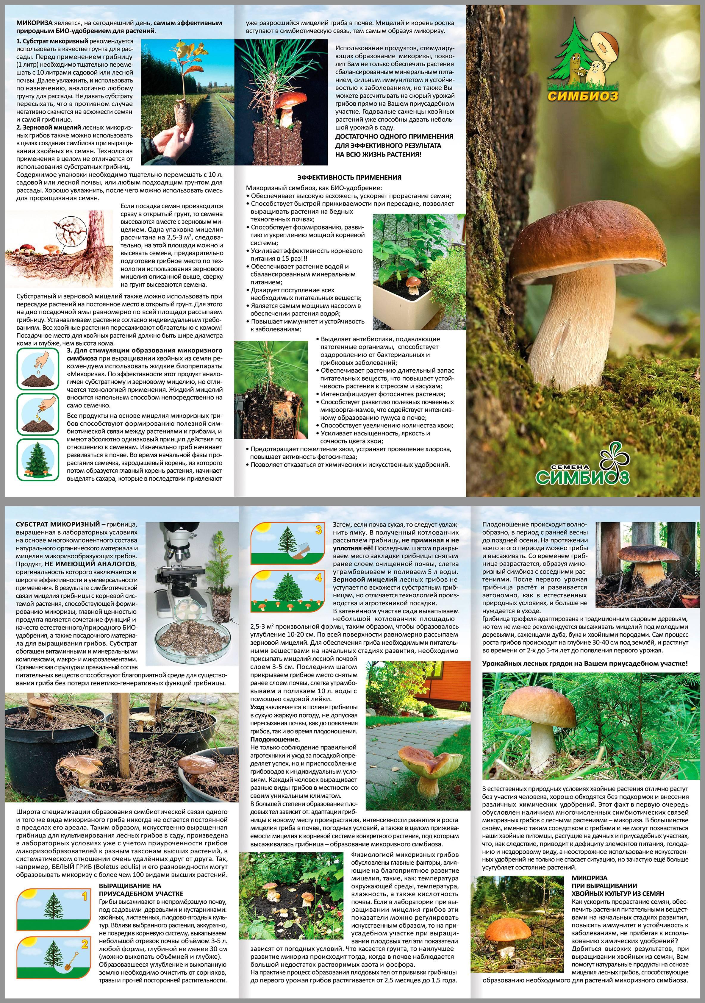 Симбиоз грибов и животных