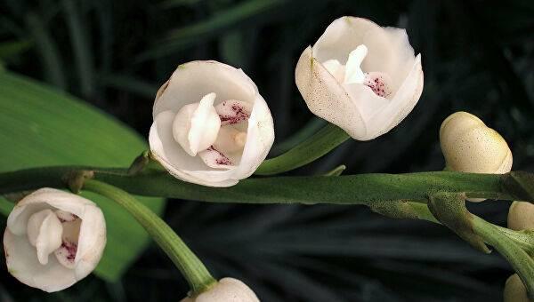 Орхидеи: особенности строения и ухода