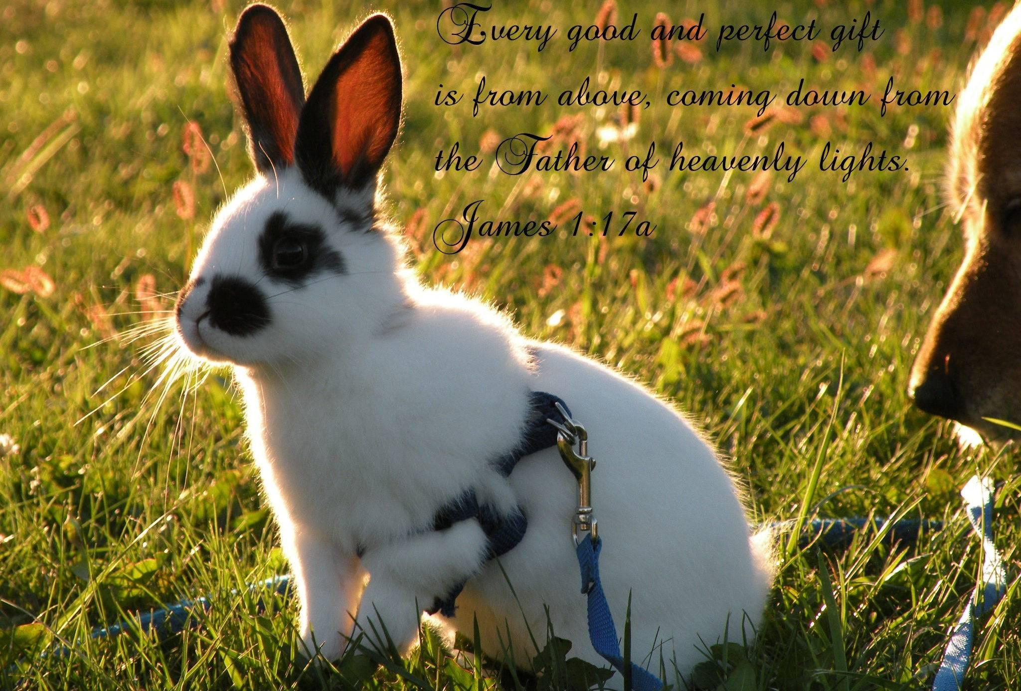 Какие бывают породы домашних декоративных кроликов?