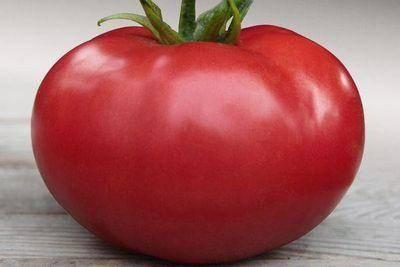 """Томат кибо f1 - описание сорта, отзывы, урожайность - журнал """"совхозик"""""""