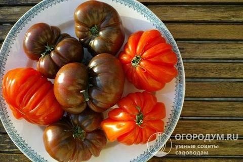 Выбираем колорит и экзотику: знакомимся с сортом томатов «черный мавр»