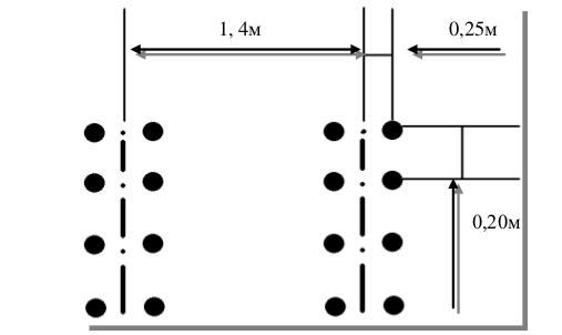 Как выращивать перец в теплице: посадка и уход, особенности, схема посадки, фото