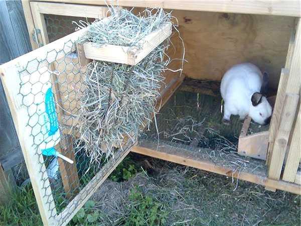 Как сделать крольчатник своими руками  пошаговая инструкция