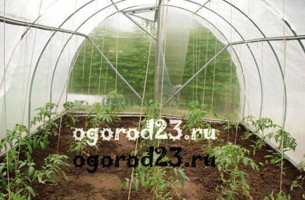 Подвязка помидор в теплице правильно: лучшие способы и приспособления, фото и видео