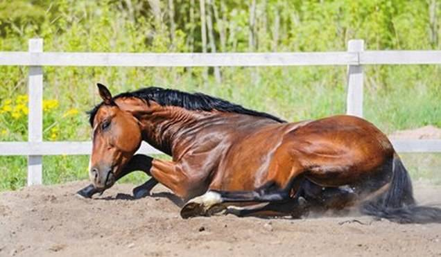 Болезни лошадей и их лечение: фото и видео