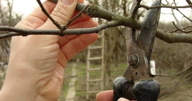 Весенняя обрезка плодовых деревьев и кустарников