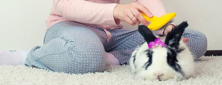 Как ухаживать за кроликами в домашних условиях в квартире