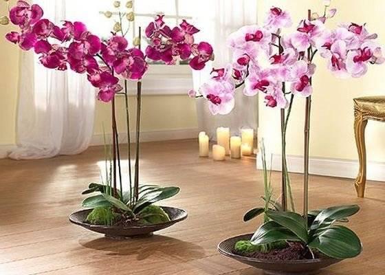 Ваши орхидеи отцвели — что делать дальше?