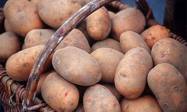 Красные сорта картофеля (с красной или розовой кожурой, глазками): описания и фото