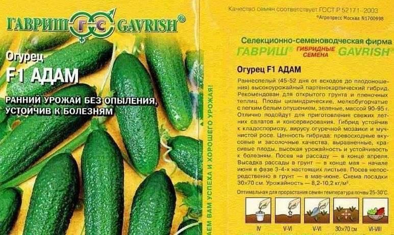 Огурец задор f1: описание сорта, отзывы, фото, урожайность