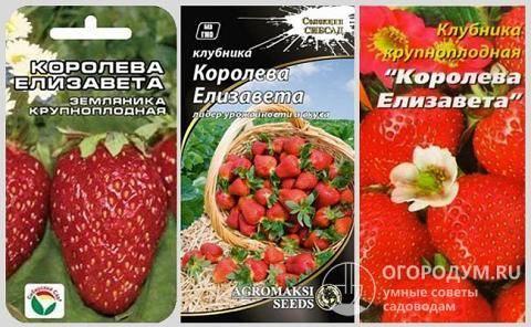 Ремонтантная земляника королева елизавета: описание сорта, выращивание клубники из семян, фото и отзывы