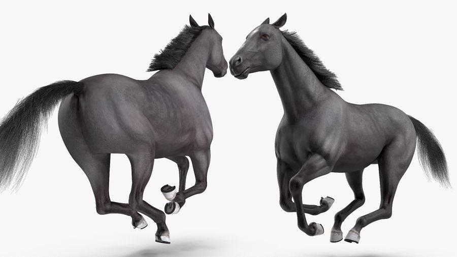 Значение контр-галопа в тренинге лошади
