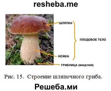 Высшие и низшие грибы: отличия, плодовое тело