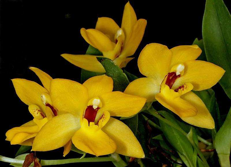 Все о содержании орхидеи дома: правила ухода и советы для начинающих