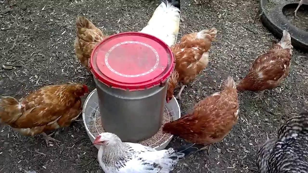 Кормушки для куриц: как сделать самодельные бункерные или деревянные конструкции для подачи еды своими руками selo.guru — интернет портал о сельском хозяйстве