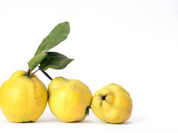 Груша кармен: описание сорта, выращивание, отзывы, фото