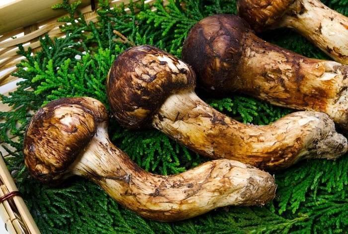 Топ 5 самых дорогих грибов в мире