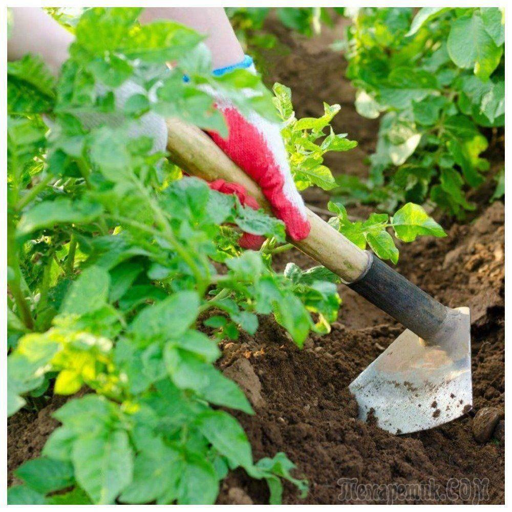 Окучник: размеры. как выбрать и настроить двухрядное активное устройство для посадки картофеля? как его использовать?