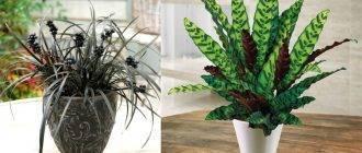 Теневыносливые комнатные растения: лучшие варианты для украшения вашего дома
