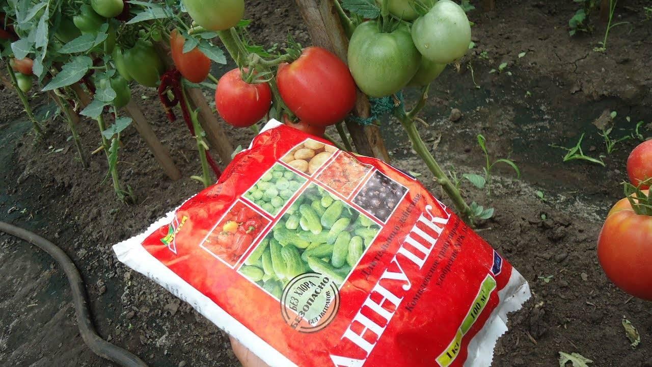 Чем подкормить помидоры в период плодоношения: лучшие подкормки, рецепты и сроки