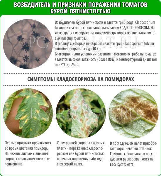 Бурая пятнистость (кладоспориоз) на томатах - лечение, в теплице, фото, препараты, народные средства