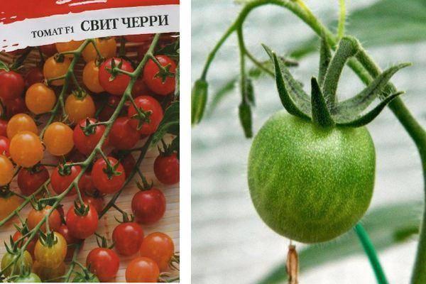 Помидоры черри: выращивание и уход в открытом грунте, теплице и дома