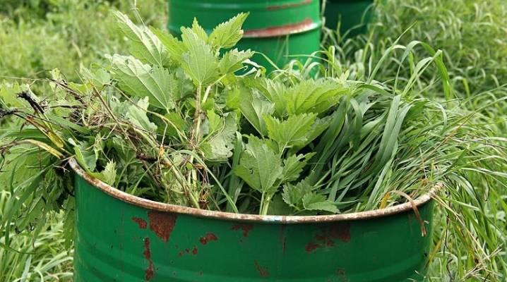 Что можно подкормить крапивой – лучшие рецепты зеленого удобрения – дачные дела