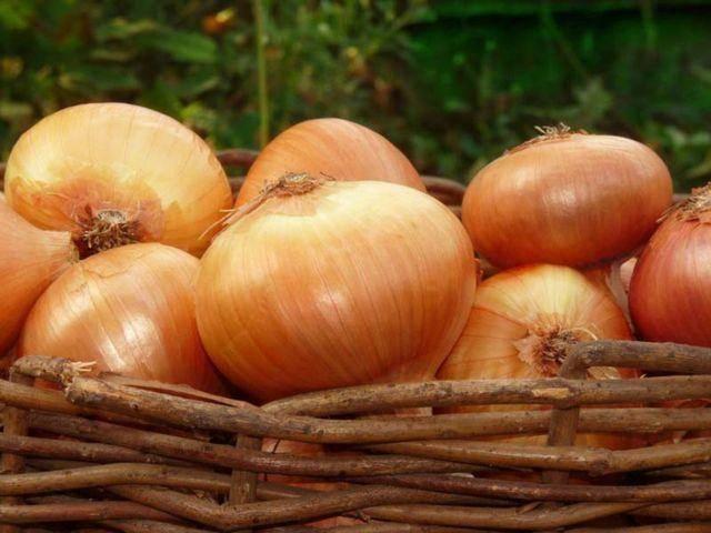 Cорта лука севка для весеннего сева: правила выбора севка в подмосковье, популярные сорта и фото