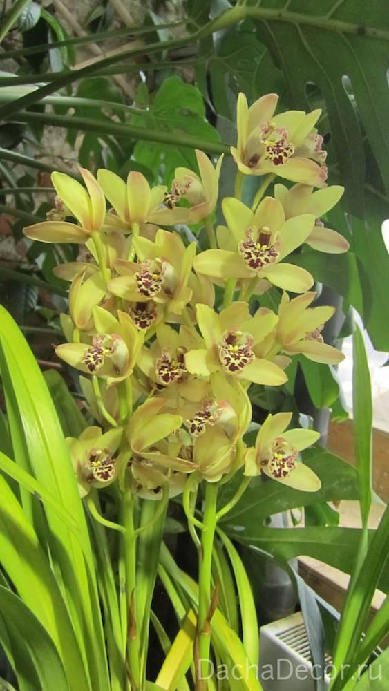 Как ухаживать за орхидеями в домашних условиях: разберется даже новичок
