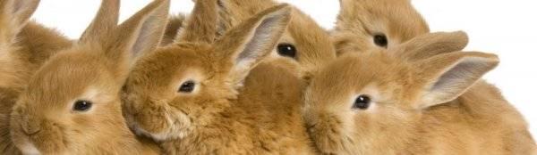 Чем кормить кроликов? - люблю хомяков